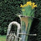Recycled Musical Instrument Planter